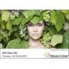 Фотохартия A4 (210x297мм.) - PRO GLOSS 265 гр. - 50 листа