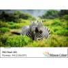 Фотохартия А4 (210x297мм.) - PRO Pearl 265 гр.